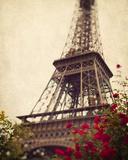 Paris Roses Giclee Print by Irene Suchocki