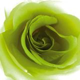 Green Summer Petals Giclee Print by Katja Marzahn