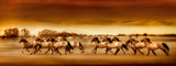 Argentine Horses Giclee Print by Bobbie Goodrich