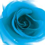 Blue Summer Petals Giclee Print by Katja Marzahn