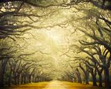 Avenue Shade I Giclee Print by Irene Suchocki
