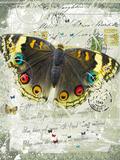 Papillon II Giclee Print by Ken Hurd