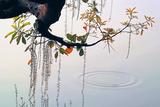 Hanoi Water Ripple Giclee Print by Nhiem Hoang The