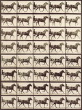 Trotting Sulky Giclee Print by Eadweard Muybridge