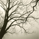 Tree Study VI Giclee Print by Michael Kahn