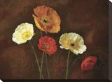Poppy Perfection I Stretched Canvas Print by Janel Pahl