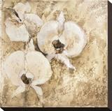 Fragrant Snow II Stretched Canvas Print by Elizabeth Jardine