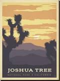 Joshua Tree National Park, California Impressão em tela esticada por  Anderson Design Group