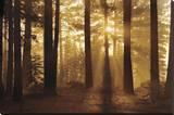 Tahoe Smoky Sunrise Leinwand von Mike Jones
