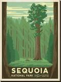 Sequoia National Park Impressão em tela esticada por  Anderson Design Group
