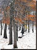 Snowfall II Stretched Canvas Print by Burney Lieberman