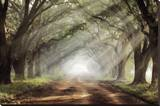 Evergreen Plantation