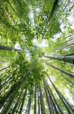 Bambus Kunstdruck