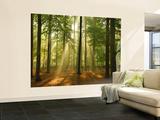 Forest in the Morning Fototapeta
