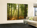 Forest in the Morning Wallpaper Mural