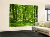 Forêt au printemps reproduction murale géante