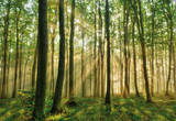 Wald in der Morgensonne Fototapete Wandgemälde