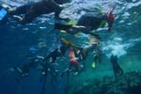 Snorkelers in Jackson Reef Near Sharm El Sheikh Photographic Print by Matt Moyer
