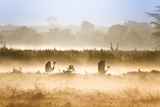 Two Crested Cranes Take Flight On a Misty Morning Photographic Print by Robin Moore