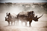 Two White Rhino Side By Side At the Solio Sanctuary Fotografie-Druck von Robin Moore