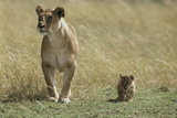 Lioness and Cub Photographic Print by Mark C. Ross