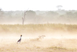 A Crested Crane Stands Out On an Ethereal Misty Morning Photographic Print by Robin Moore