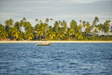 A Dhow Moored Off the Coast of Matemo Island, Mozambique Fotografisk tryk af Jad Davenport