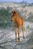 A Wild Pony On the Beach At Chincoteague Island Photographic Print by Scott Sroka