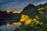 Orange Sneezeweed, Wyethia Amplexicaulis, At Maroon Lake Photographic Print by David Hiser