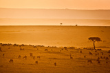 Wildebeest At Sunset in the Masai Mara Photographic Print by Robin Moore