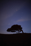 A Cork Tree in Silhouette Against the Night Sky Between Castelsardo and Tempio Pausania Photographic Print by Dave Yoder