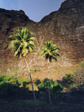 Palm Trees At the Nu'alolo Kai Archeological Site Photographic Print by Diane & Len Cook & Jenshel