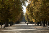 Parma Residents Stroll Through Tree-lined Promenades in Parco Ducale Photographic Print by Dave Yoder