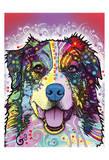 Australian Shepherd Prints by Dean Russo