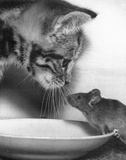 Cat and Mouse Humor Poster Posters
