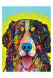 Bernese Mountain Dog Posters by Dean Russo