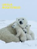Polar Bear (Ursus Maritimus) Affiches par Thorsten Milse