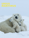 Polar Bear (Ursus Maritimus) Prints by Thorsten Milse