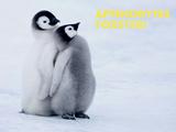 Emperor Penguin Chicks (Aptenodytes Forsteri) Posters by Thorsten Milse