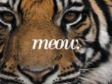 Meow Print by Thorsten Milse