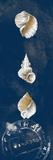 Coastal Shells Panel I Prints by Lanie Loreth