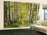 Birch Tree Forest Path Fototapeten