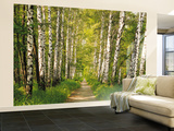 Birch Tree Forest Path Wall Mural
