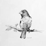 Bird Drawing IV Pôsters por Lanie Loreth