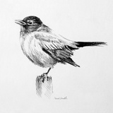 Bird Drawing III Prints by Lanie Loreth