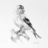 Bird Drawing II Prints by Lanie Loreth