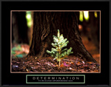 Determination: Little Pine Poster