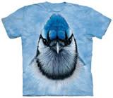 Geai bleu Vêtement