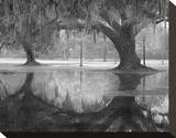Two Oaks and Reflection, Audubon Park, NOLA Stretched Canvas Print by William Guion