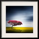 Medusa Framed Photographic Print by Philippe Sainte-Laudy
